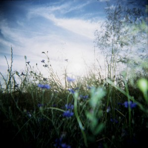 close shot of a summery field with blue flowers